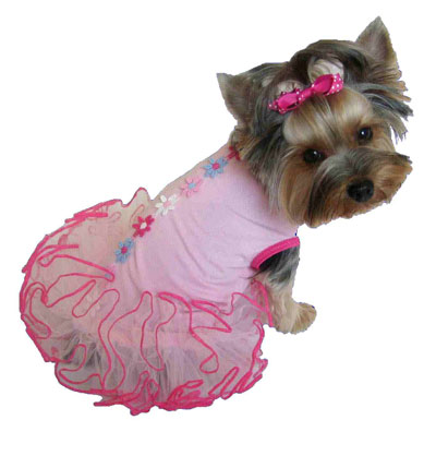 Animal - Dog in Clothes 2