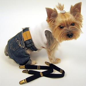 Animal - Dog in Clothes 1