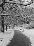 Object - Snowy Path