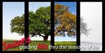 Series_07_seasons_parenting_2