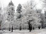 Object_snowy_trees